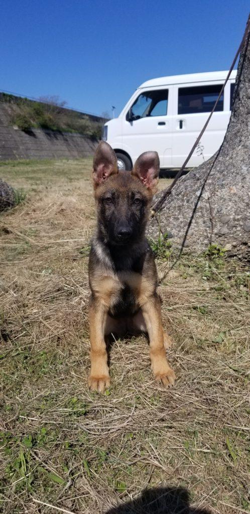 未来の警察犬!?